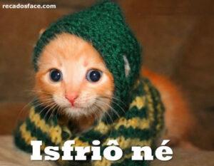 8 Memes de gatos com frio